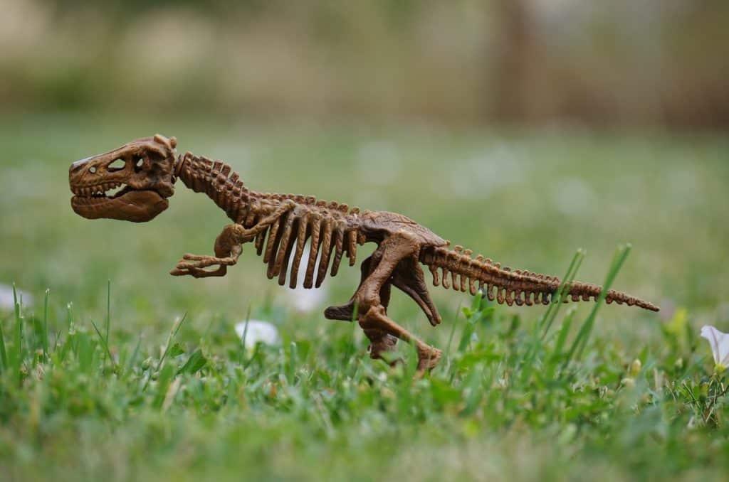 dinosaur bones garden