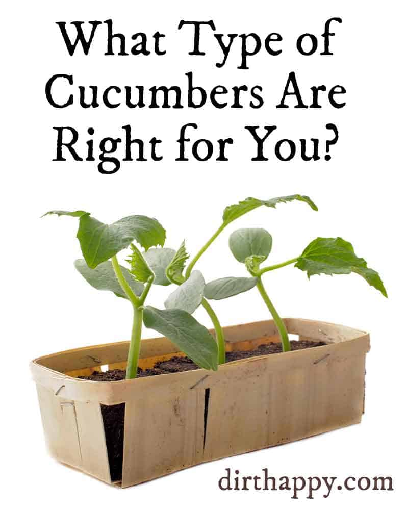 what are the best cucumbers to grow