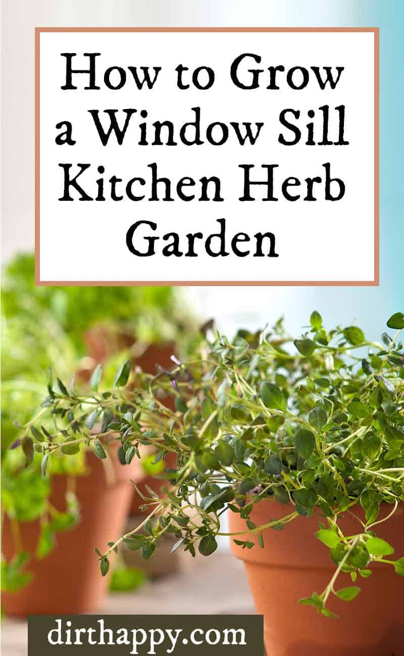 how to grow a windowsill kitchen herb garden