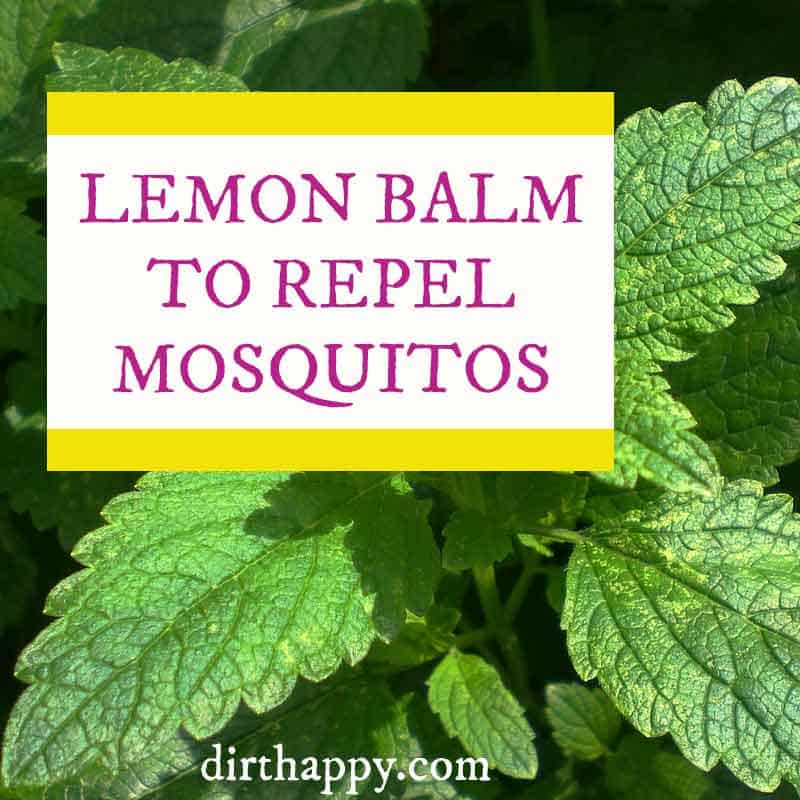 lemon balm to repel mosquitos