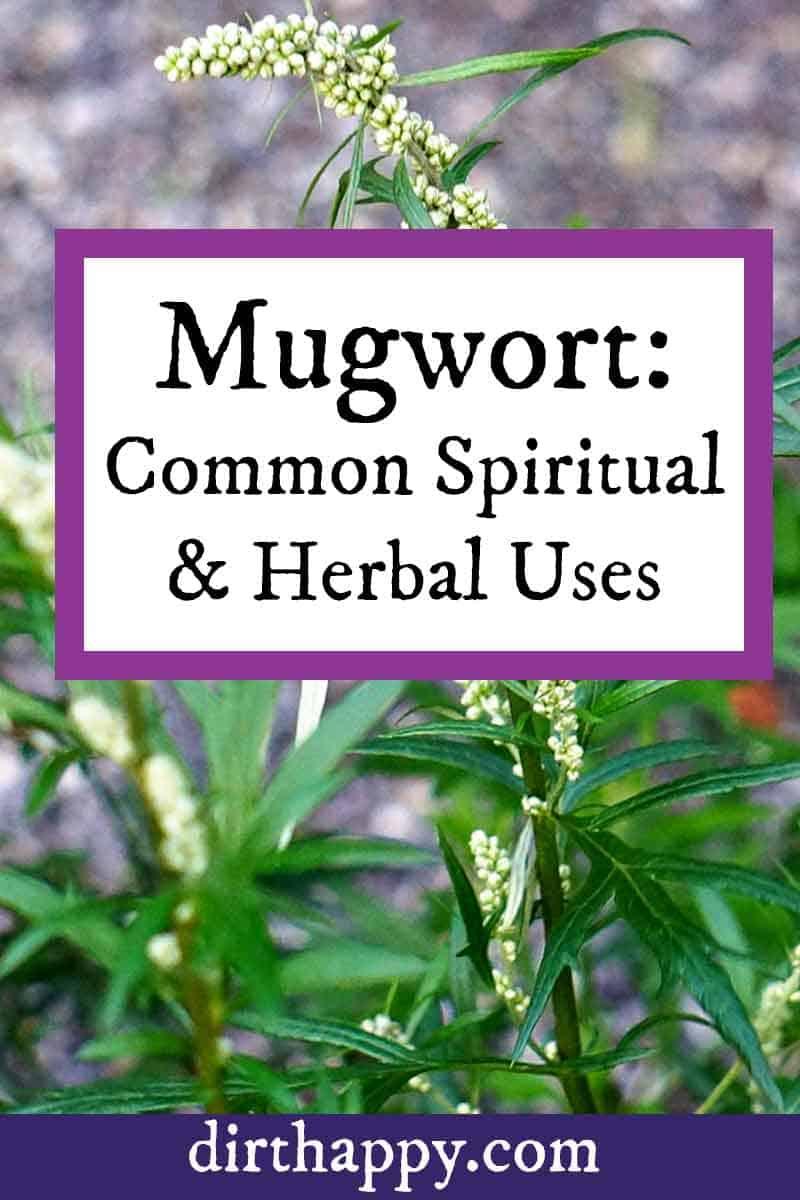 mugwort plant uses