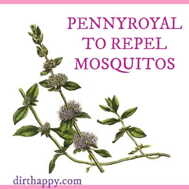 pennyroyal natural mosquito repellant
