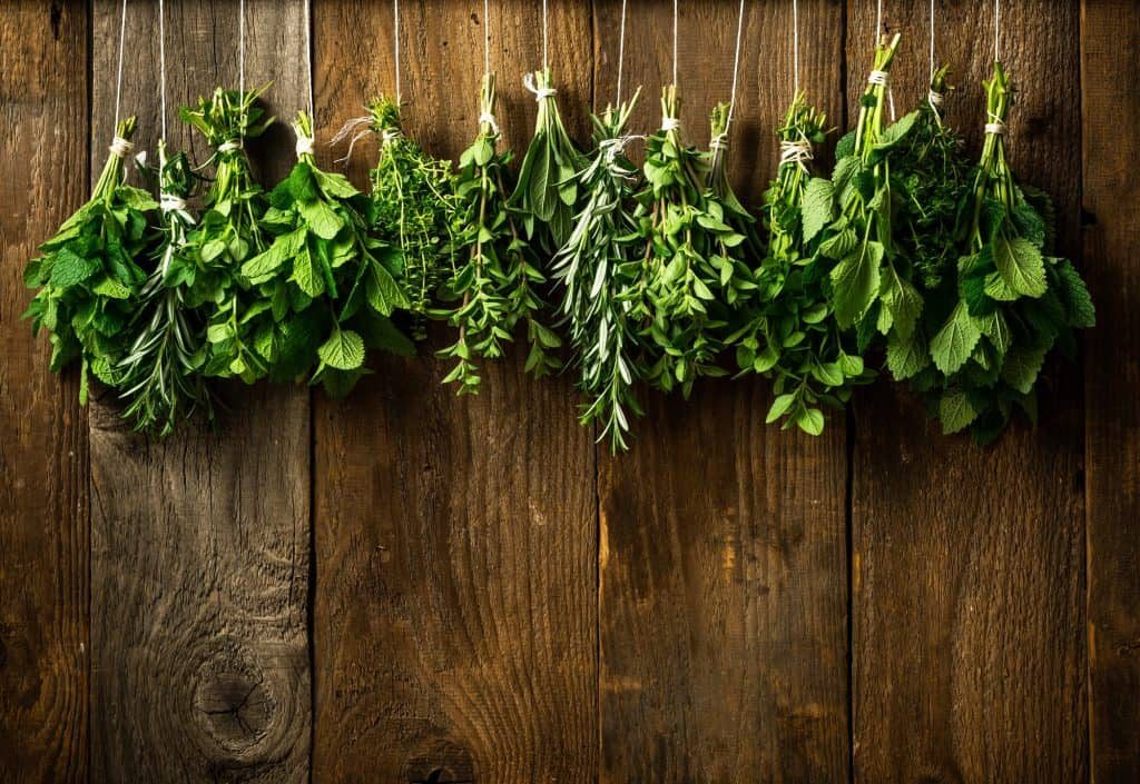 Collection of Various Fresh Herbs Hanging in Bunches for Drying