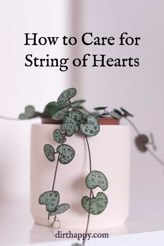 string of hearts plant care